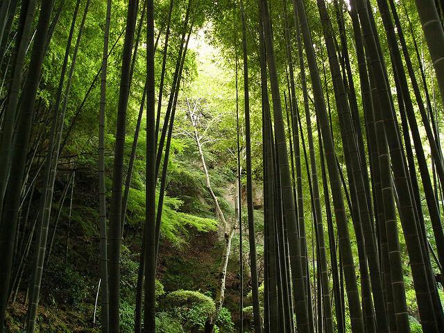 鎌倉の報国寺の竹林は心を奪われる美しさ!アクセスは?駐車場は?