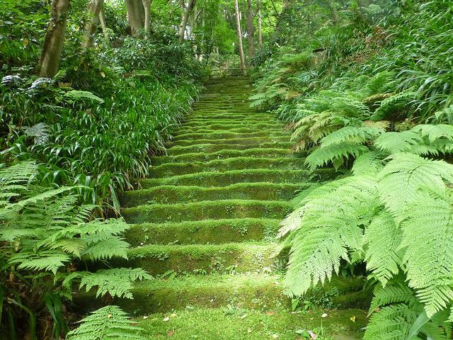 鎌倉の妙法寺は苔が美しい苔寺!アクセスは?御朱印は?