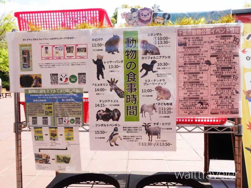 千葉市動物公園 スケジュール