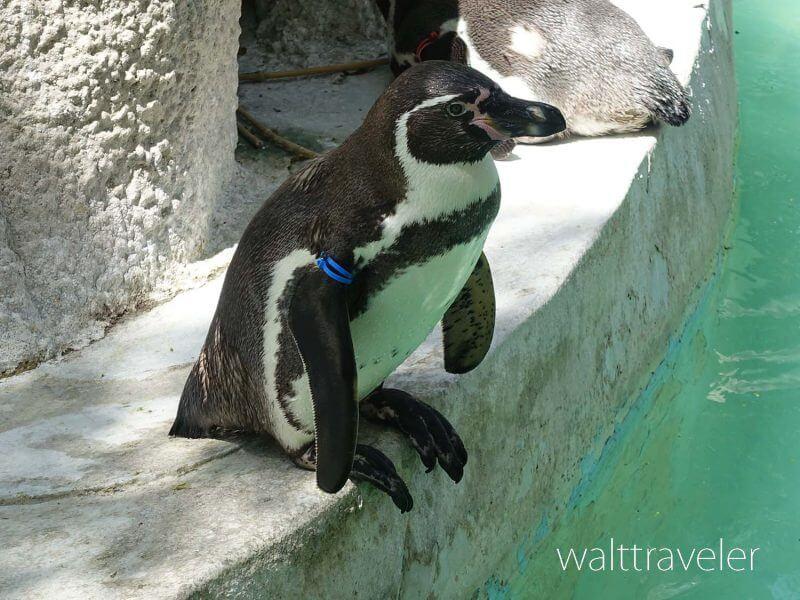 千葉市動物公園 ペンギン