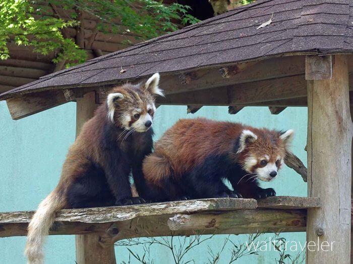 千葉市動物公園の割引は?混雑状況もチェック!