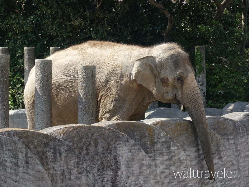 千葉市動物公園 ゾウ