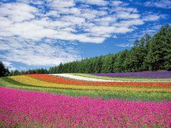 北海道旅行の予算と費用まとめ!合計でいくらになるの?