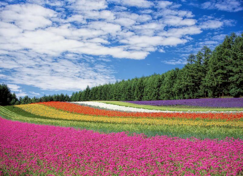 北海道 旅行 予算 安い時期 ベストシーズン