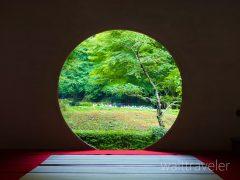 鎌倉の明月院はあじさい寺!アクセス・御朱印・あじさいの見頃は?