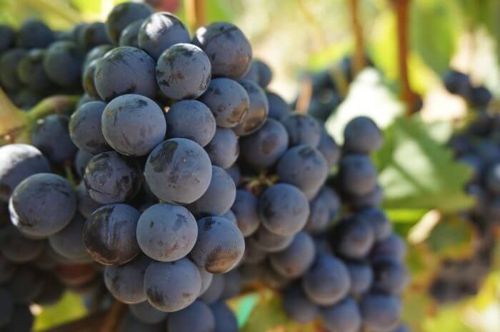 果物狩り・フルーツ狩りの時期一覧!確認すること・持っていくと便利なものは?
