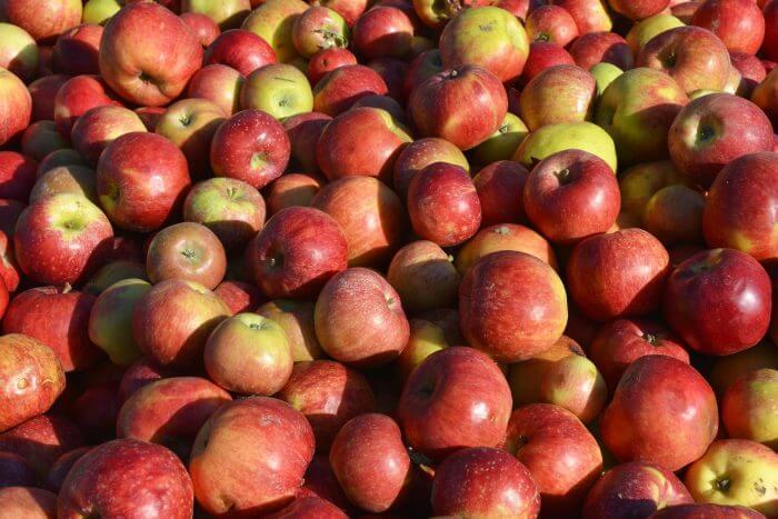 長野のりんご狩りおすすめ農園7選!食べ放題・時期は?