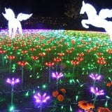 東武動物公園イルミネーション2019-2020